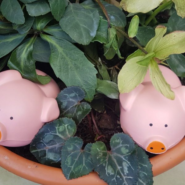 Toy pigs in plant pot